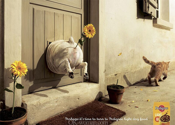 Funny advertisements pictures