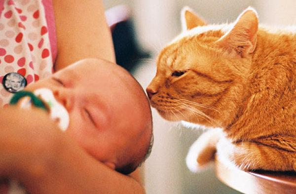 نگهداری گربه و کودک