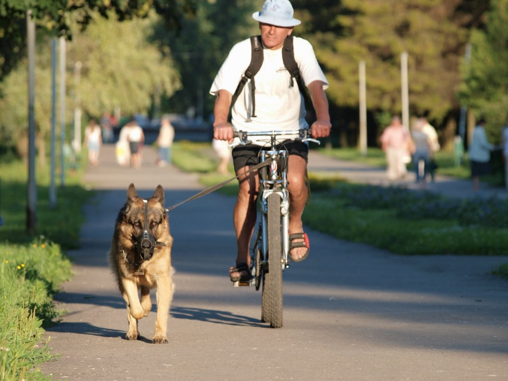 Картинки прогулка с собакой 2